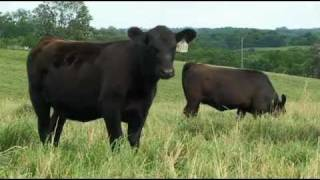 I Am Angus: Brian McCulloh and Woodhill Farms