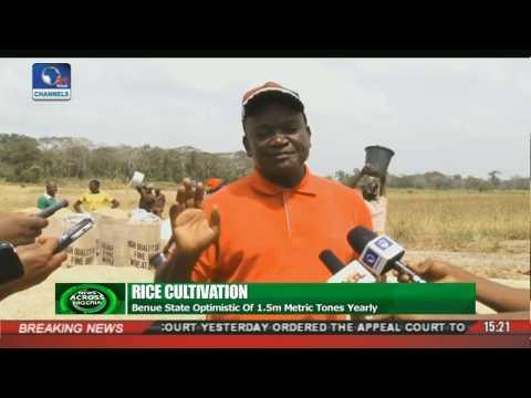 News Across Nigeria: Benue, Cross River Boost Rice Production