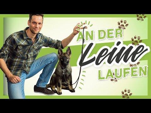 An Der LEINE Laufen - So Lernt Es Dein HUND WELPE Garantiert