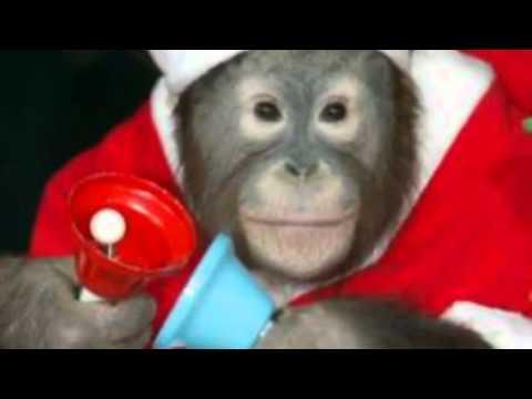 Christmas Monkey - YouTube