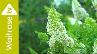 The Waitrose Garden: episode 4, wildlife garden
