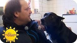 Hundeprofi: Das Problem ist der Halter | Sat.1 Frühstücksfernsehen