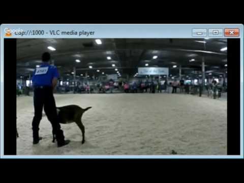2016 Lancaster County Super Fair - 4-H Dairy/Pygmy Goat Show