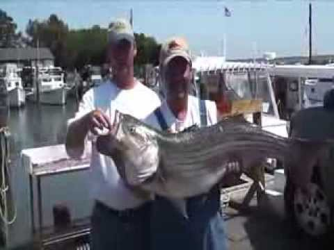 Rockaholic Fishing Charters Chesapeake Bay, MD