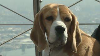 В Америке выбрали лучшую собаку (новости)