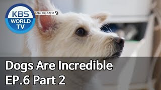 Dogs are incredible | 개는 훌륭하다 EP.6 Part 2 [SUB : ENG/2019.12.31]