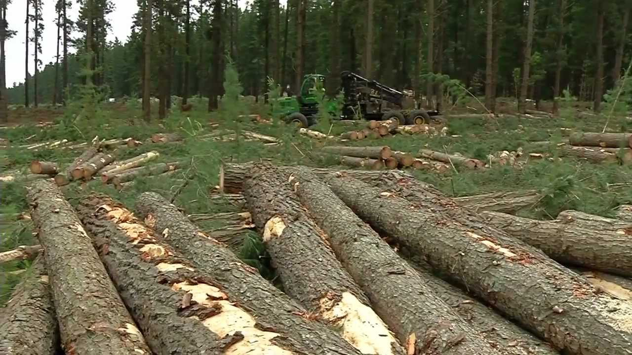 South australia 39 s pine tree experts youtube for Pine tree timber