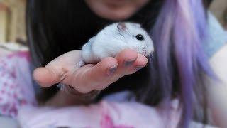 UNGEZIEFER im Hamstergehege .....
