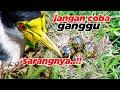 Burung Langka Ini Bertelor Sembarangan Di Aviary Raksasa Ini Takut Terinjak  Mp3 - Mp4 Download