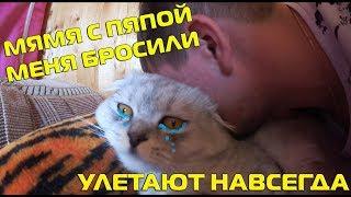 Кот Кевин сильно плачет | прощание с родителями