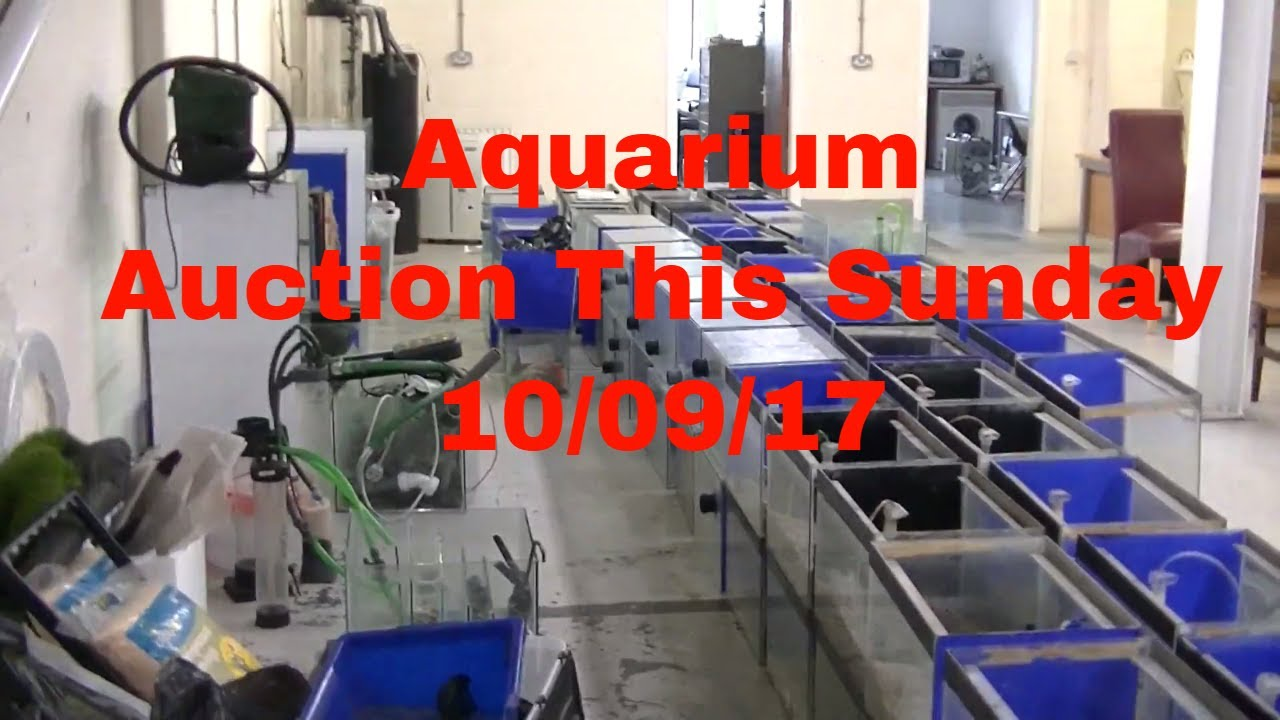 upcoming auction of fish tanks aquarium filters pumps u0026 a load