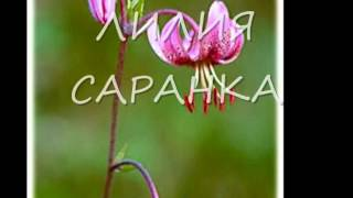 Редкие растения, занесённые в Красную книгу Югры