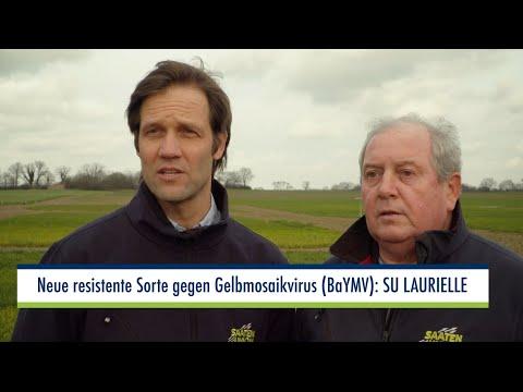 SU LAURIELLE – die neue, gegen den Gelbmosaikvirus resistente Gersten-Sorte