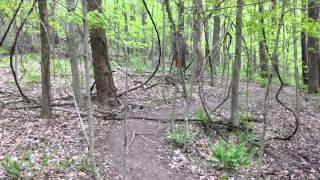 Understanding trail markers