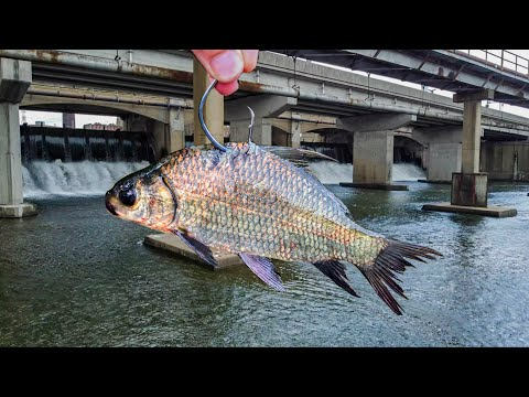 The LOST SPILLWAY Of GIANTS!!! (New PB X2)