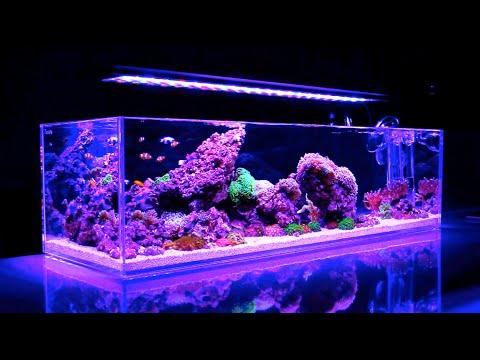 Reef Iwagumi || UNBELIEVABLE Reef Aquarium HD