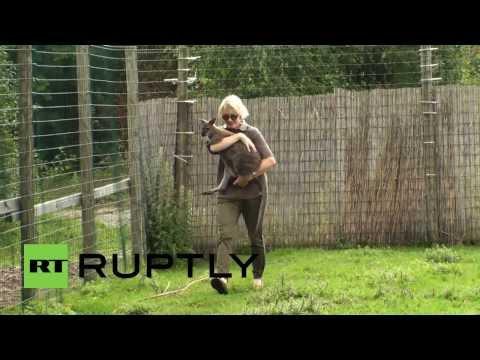 Estonia: Albino kangaroos beat one in a thousand chance - three times!