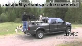 Zdolne Psy Myśliwskie na tropie dużych Niedźwiedzi.