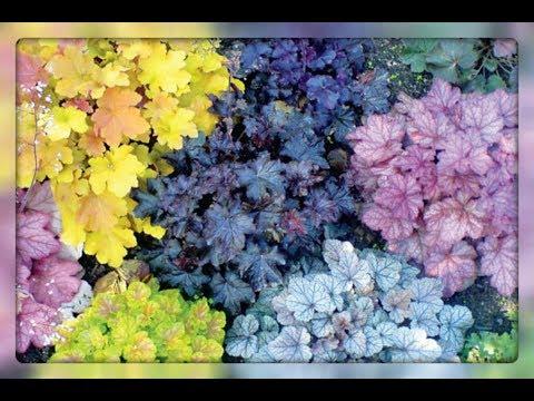 видео: Цветы в саду, которые можно не поливать