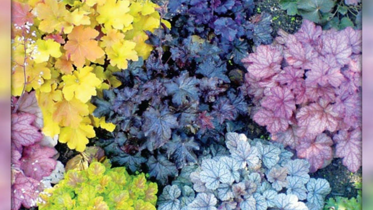 можно поливать цветы квасом