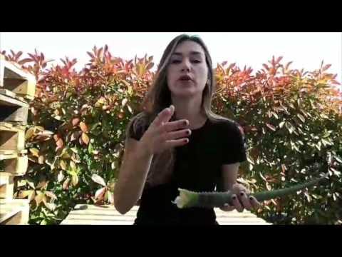 Dove acquistare Frutta e Verdura Italiana: FruttaWeb from YouTube · Duration:  1 minutes 30 seconds