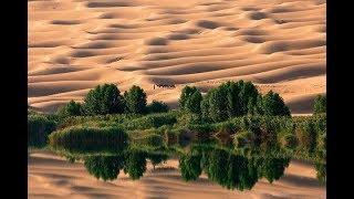 사막서 벼 재배 |CCTV 한국어방송