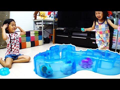 ●普段遊び●ライブペット キューティマウスとファインディング・ドリーのコラボ!!まーちゃん【5歳】おーちゃん【2歳】