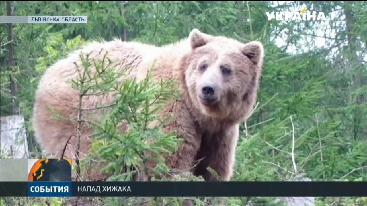"Результат пошуку зображень за запитом ""ведмідь напав на людину"""