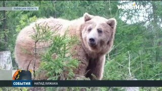 У львівських Карпатах на людину напав ведмідь(Голодний звір, який прокинувся після зимової сплячки, ледь не вбив чоловіка. Як горянин вирвався від клишон..., 2016-03-31T13:56:51.000Z)
