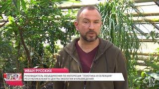 Иван Русских: Секрет отличного урожая смородины, малины и земляники / Сад и огород