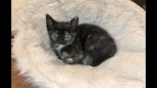 Kittens Get Clean & Everyone Gets Vaccinations - #33/34 - Feral Cat Family Socialization