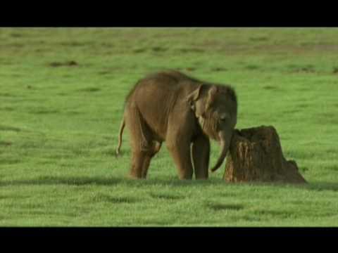 Long Live The Elephants!