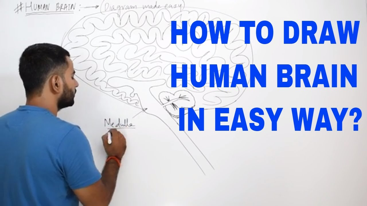 How To Draw Human Brain In Very Easy Way Class 10 Cbse Youtube