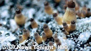 How_Denver_Decriminalized_Magic_Mushrooms_(HBO)