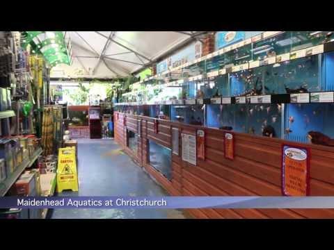 Maidenhead Aquatics @ Christchurch, Dorset, PFK Shoptour