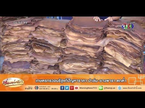 เรื่องเล่าเช้านี้ เกษตรกรวอนรัฐแก้ปัญหาราคา ปาล์ม-ยางพารา ตกต่ำ (1 ก.ย.58)