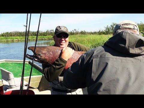 Trophy King Salmon Caught in Alaska on 4th of July 2014