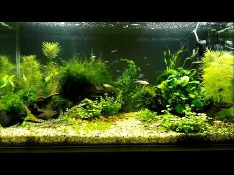 Мой аквариум на 100 литров, запуск и спустя 2 месяца