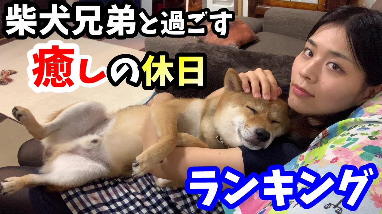 柴犬兄弟と過ごす最高に幸せな休日の瞬間ベスト5【上半期振り返り】