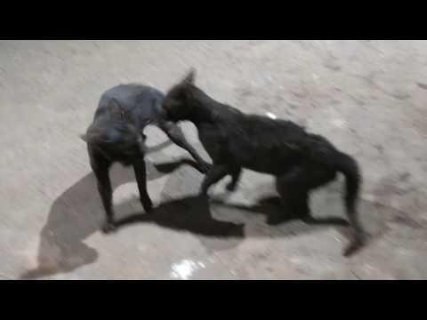 cats fighting videos