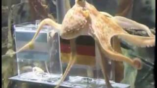 Paul The Octopus - song by Parry Gripp