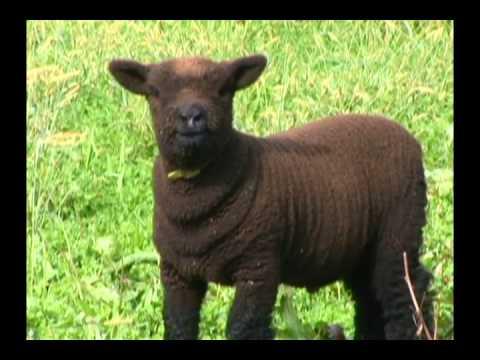 farm animals james