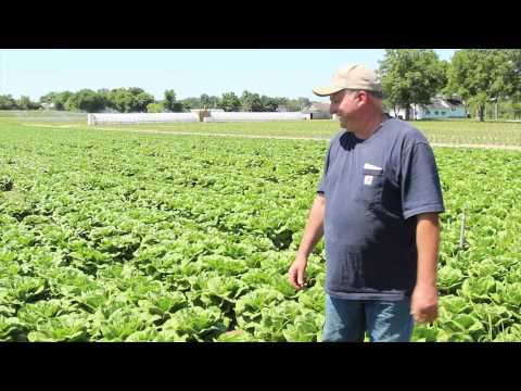 AmazonFresh Grower's Story: Flaim Farms - Vineland, New Jersey