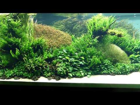 Encuentro, Takashi Amano, Florestas Submersas