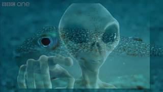 Lý Giải Những Hiện Tượng Siêu Bí Ẩn Trên Trái Đất Khiến Các Nhà Khoa Học Đau Đầu !!!