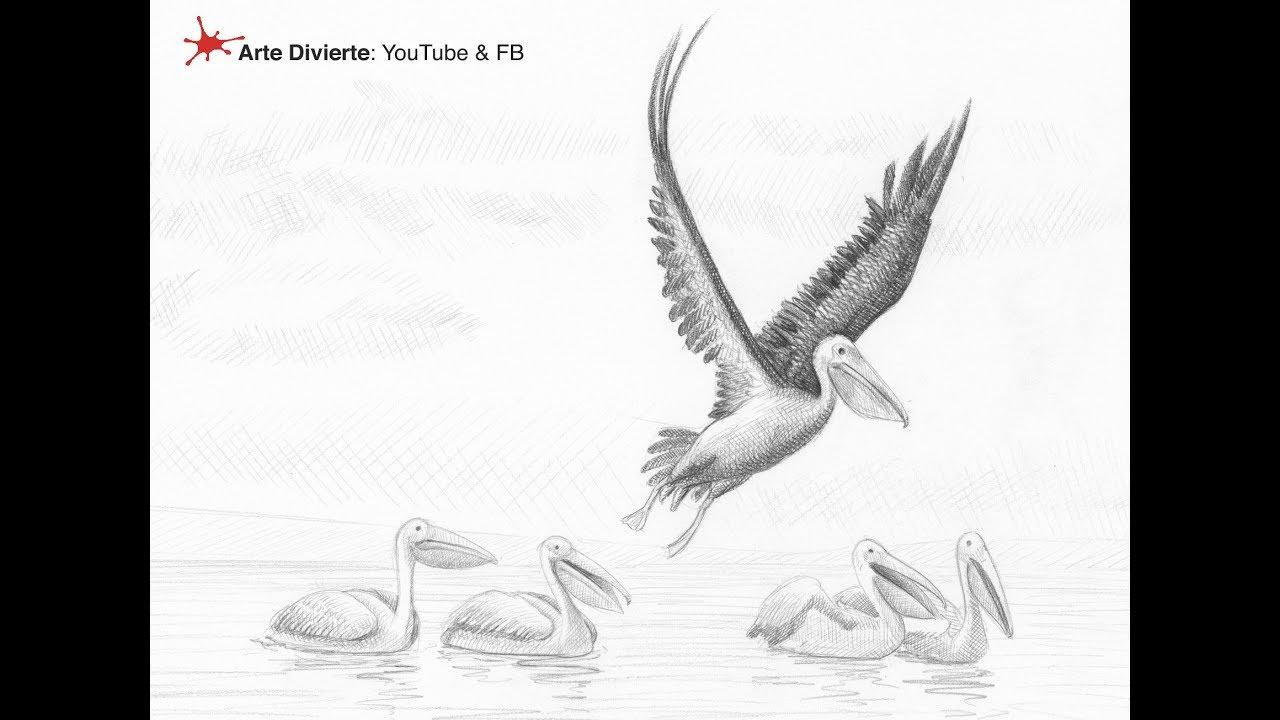 Cómo Dibujar Pelícanos Y Dos Anécdotas Pelicanezcas