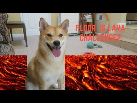FLOOR IS LAVA CHALLENGE by Shiba Inu Doge!