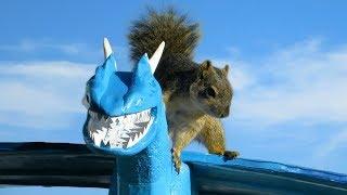 Squirrel Steals Dragon - DragonFight