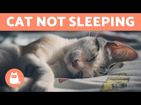 Why Is My Cat NOT SLEEPING At Night?