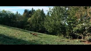 "Summary of french film ""le renard et l'enfant"" (the fox and the child)music - angelo branduardi la volpeennio morricone giù testa (a fistful dynam..."